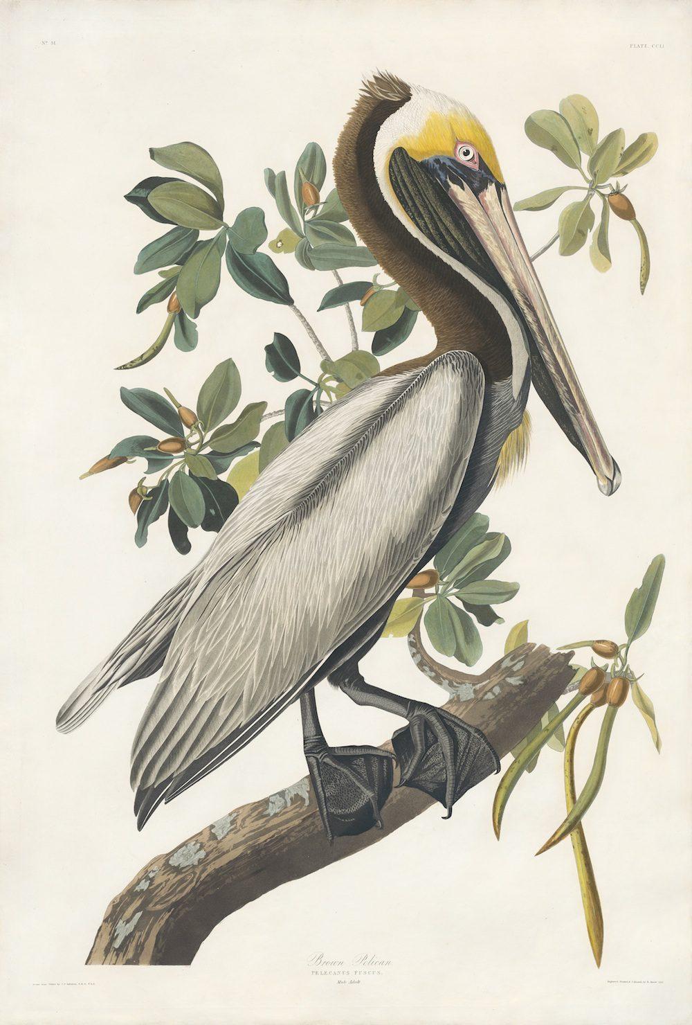 awhite heron essay a white heron essay words cram awhite heron essay