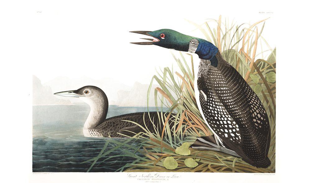 Birds of America · Pelican Bomb