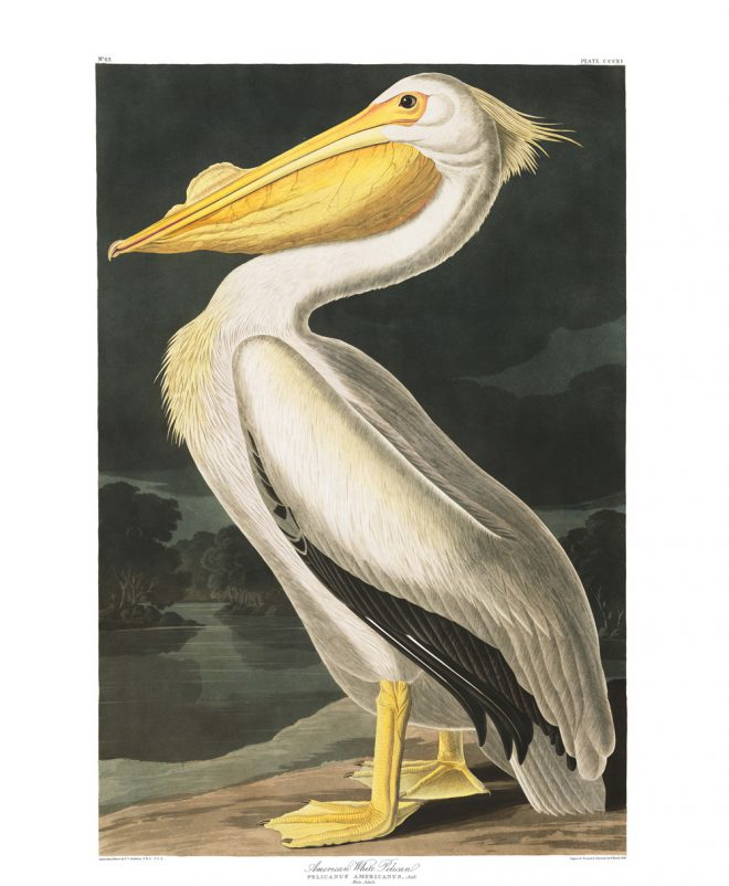 John James Audubon musician